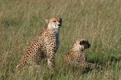 Серия D: Животные Африки